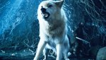 Game-Of-Thrones-Season-8-Ghost-the-Direwolf-Is-the-Best-Choice-for-the-Iron-Throne-1280x720.jpg