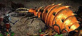 Mon-coldworm.jpg
